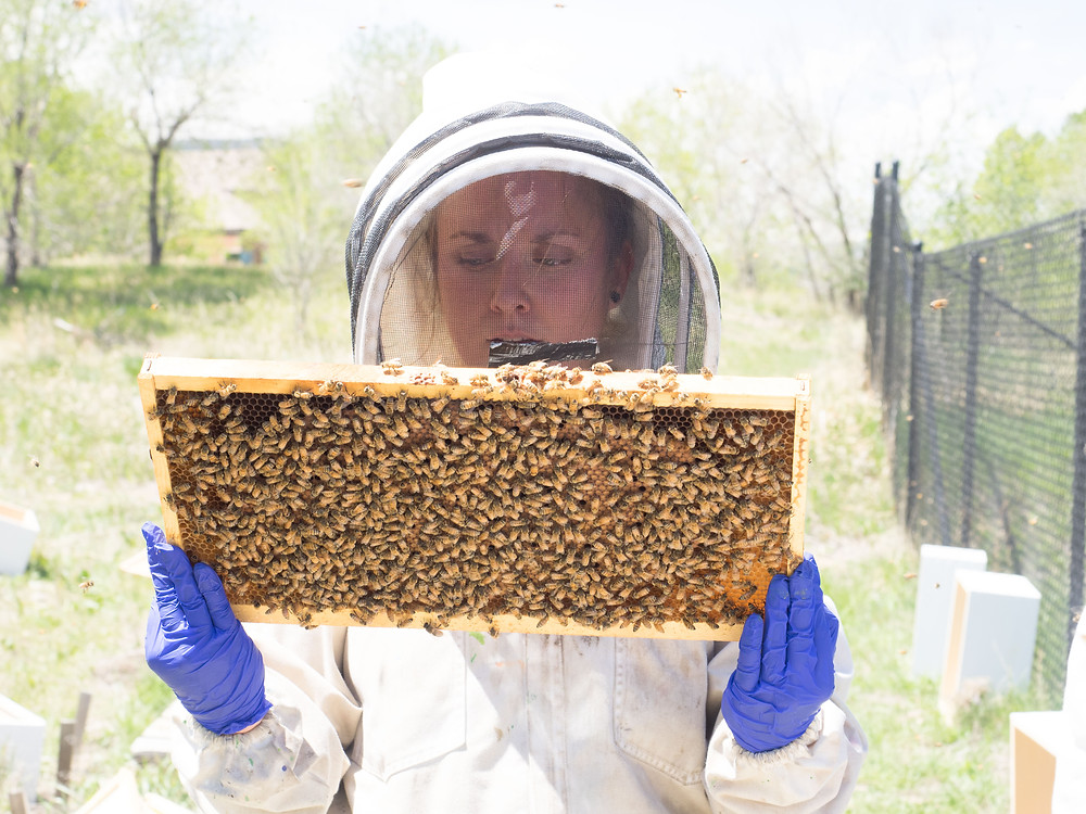 Agriculture Photographer - Beekeeper