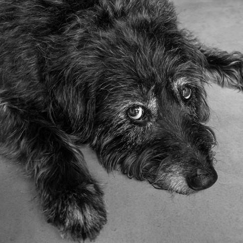 Pet Photographer - Boulder, Colorado