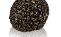 Fresh Burgundy Truffles, OUT OF STOCK