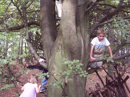 Children should climb trees, says UK Education Minister