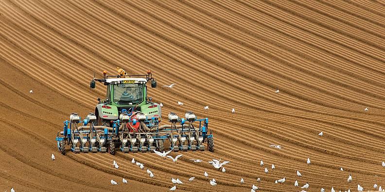 Farmers field lines