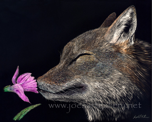 Coyote and Flower