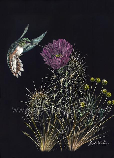 Hummingbird and Hedgehog