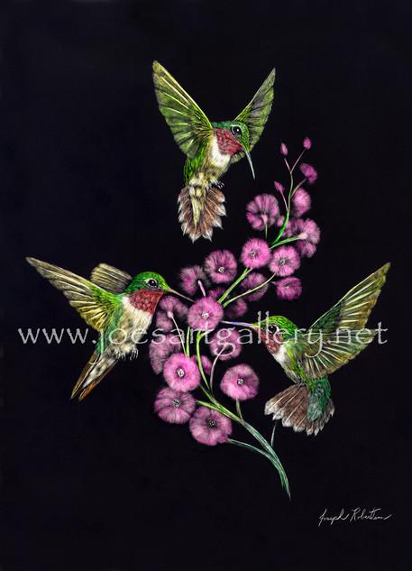 Three Hummingbirds #2