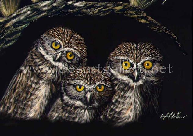 Three Burrowing Owls