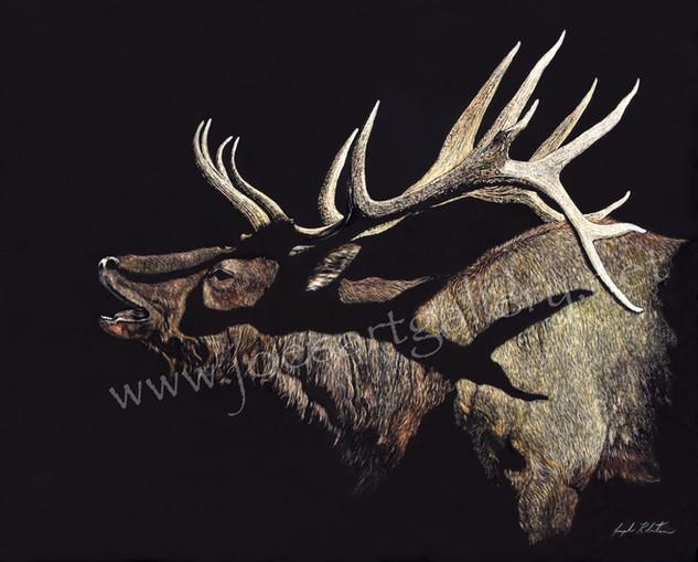 Grand Canyon Bull