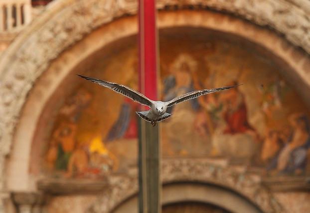 L'arte di volare, Araldi del Vangelo.-001