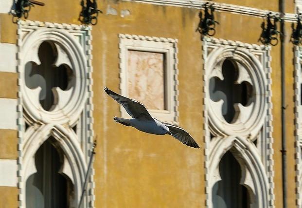 L'arte di volare, Araldi del Vangelo.-002