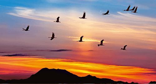 Uccelli in migrazione