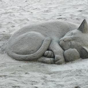burgas beach cats 2020.jpg