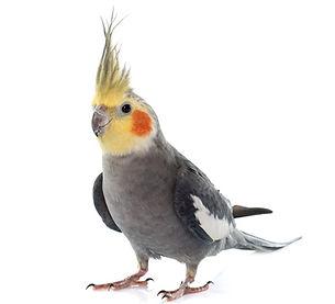 livebird2.jpg