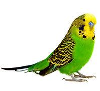 livebird1.jpg
