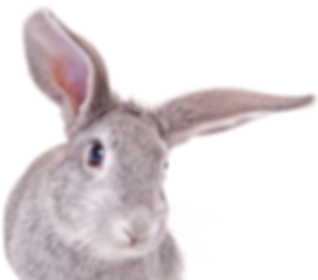 Bunny-01.png