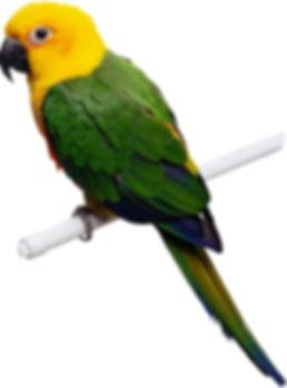 birddddd.jpg