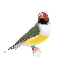 livebird3.jpg