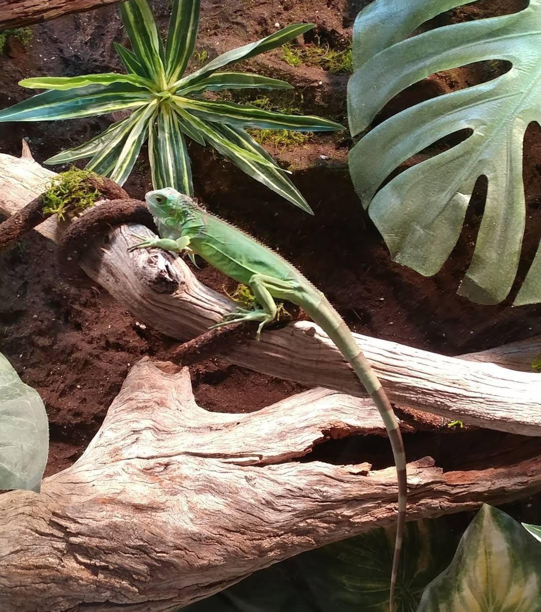 Iguana's Paradise