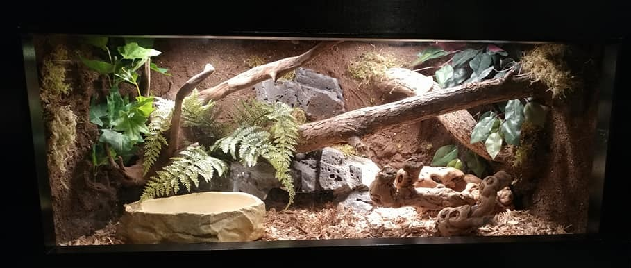 Python's Lair