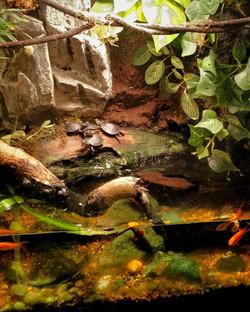 Paludarium & Turtles