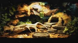 Leopard Gecko's Den