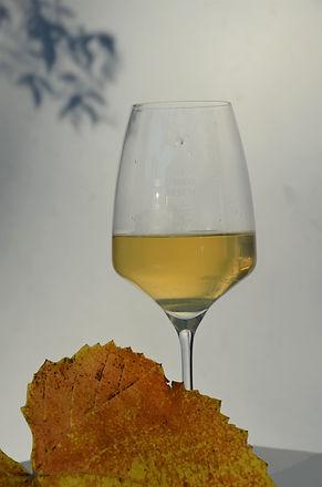 Chardonnay 1.JPG