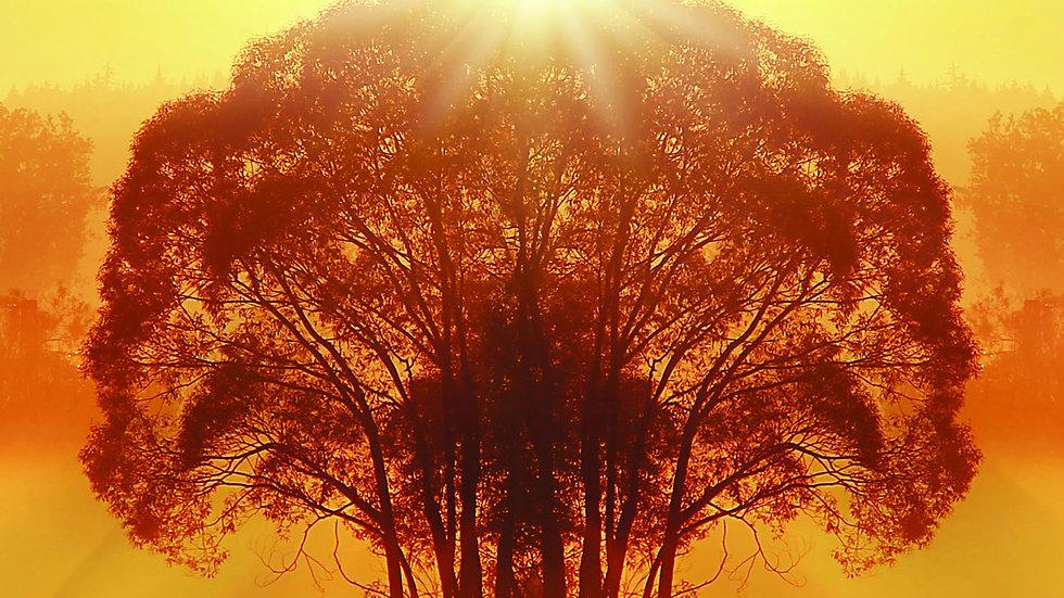 Tree Meditation (Theta Brainwave Version)