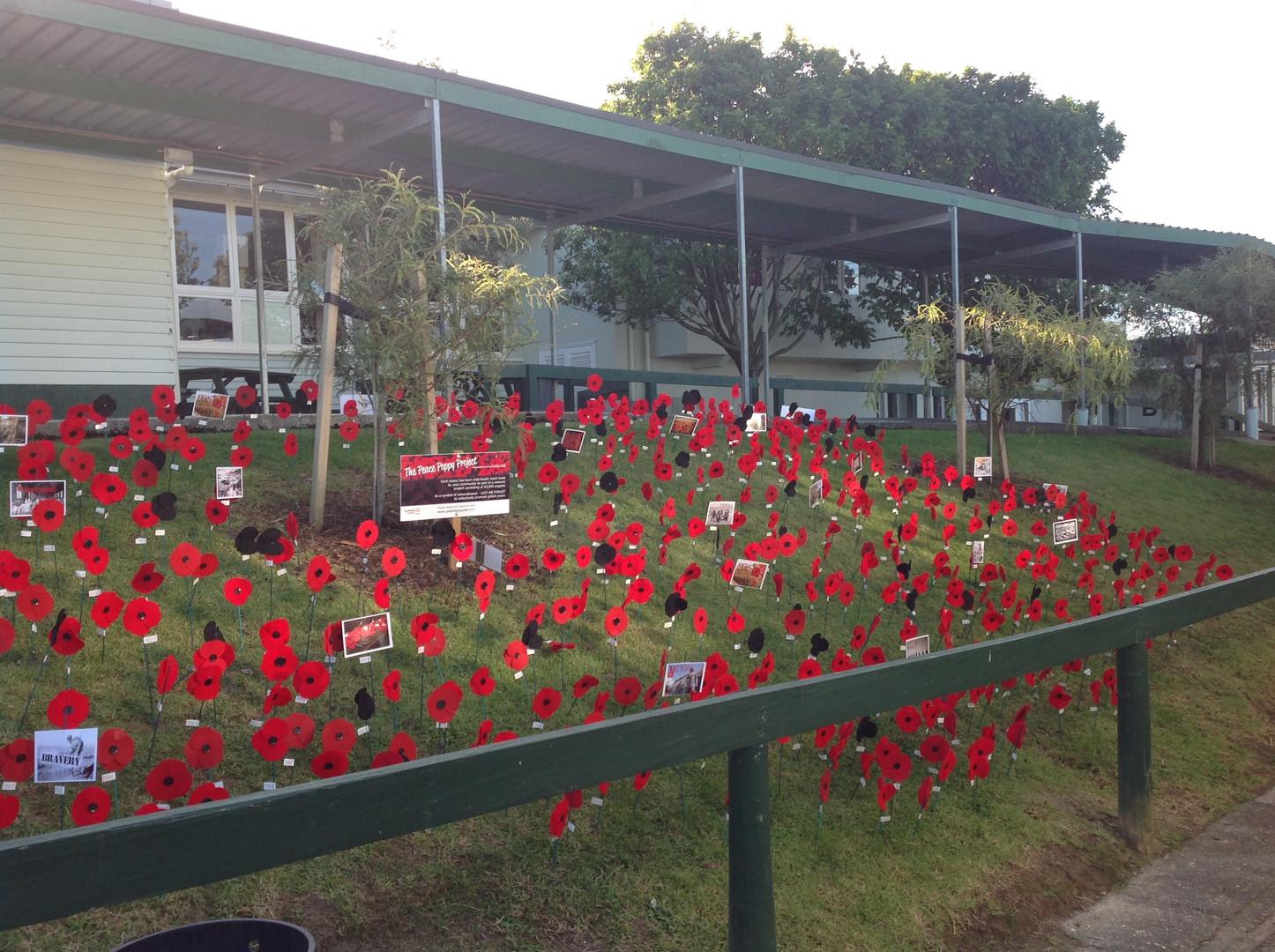 Lynfield College display.JPG