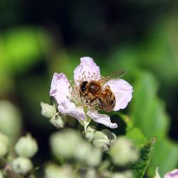 OH YES unplug abeille