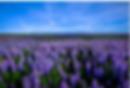 Bildschirmfoto 2019-11-01 um 16.04.45.pn