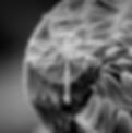 Bildschirmfoto 2020-03-29 um 17.41.03.pn