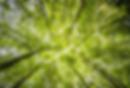 Bildschirmfoto 2020-06-29 um 14.01.15.pn