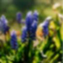 Bildschirmfoto 2020-06-29 um 13.02.58.pn