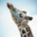 Bildschirmfoto 2019-01-29 um 16.04.55.pn