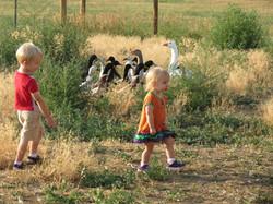 ducks with b& k