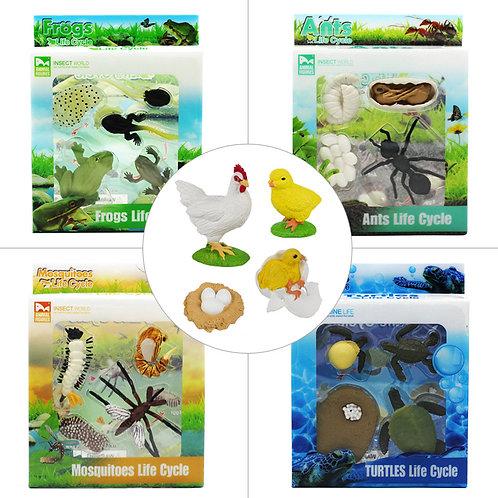 Animal Life Cycle Animal Growth Learning Model