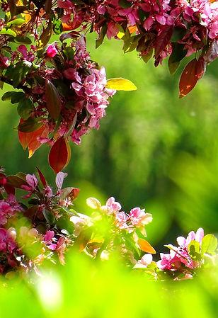 beautiful-bloom-blooming-381739_edited.j