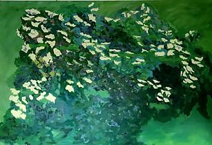 Il Sambuco / The Elder Tree