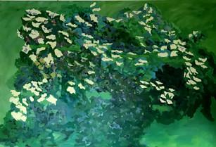Il Sambuco / The Elder Tree (venduto)