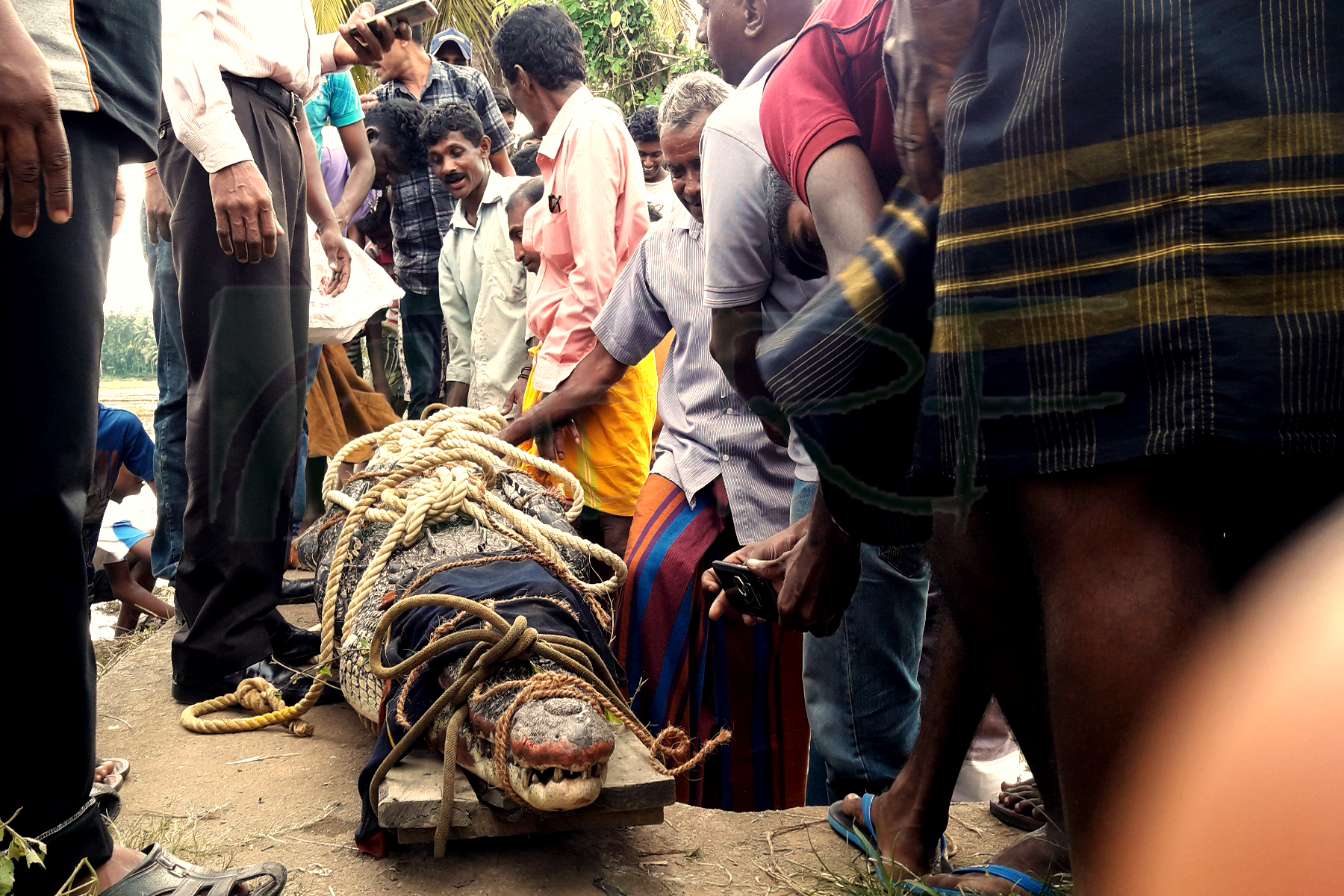 Human – Crocodile conflict in Nilwal