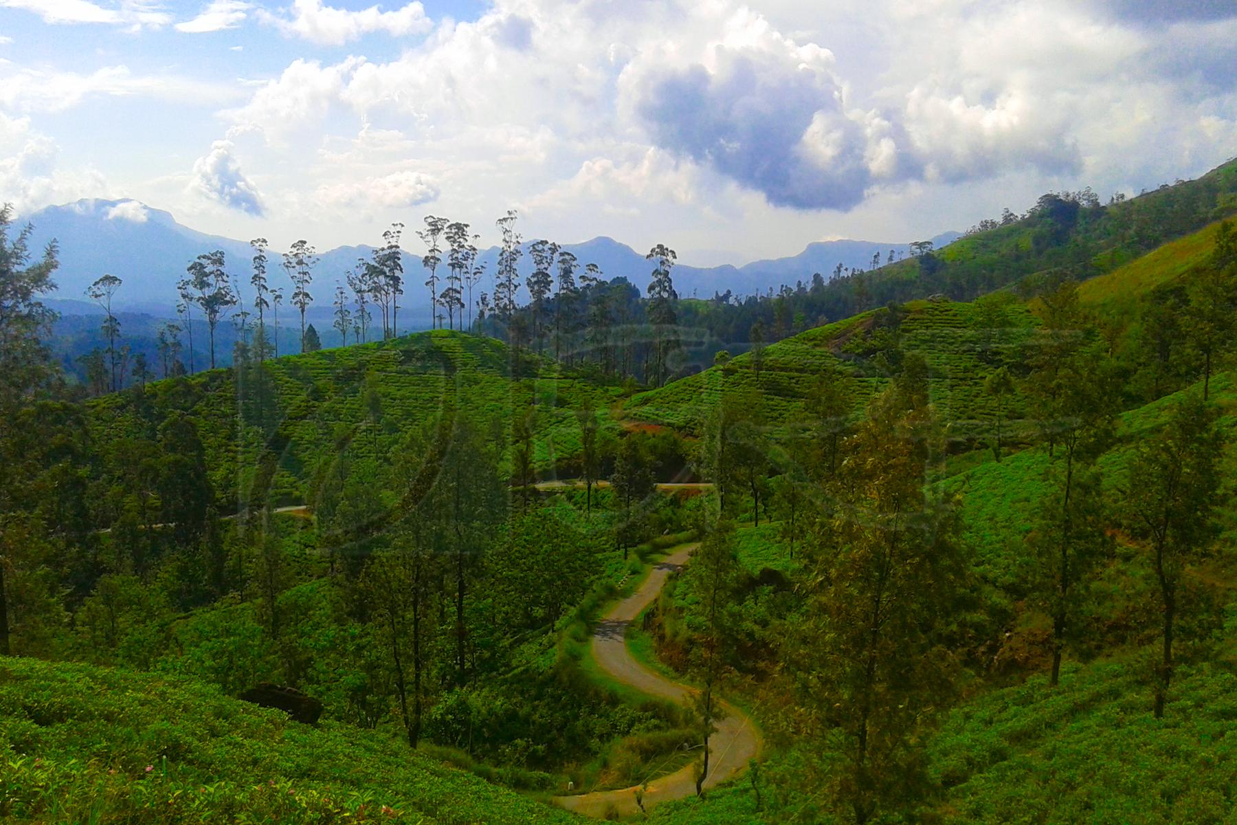 Hill country landscape in Sri Lanka