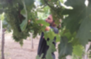Green pruning