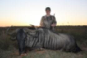 Blue Wildebeest2 - Copy.jpg