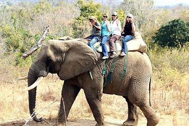 Elephant back Safaris2.jpg