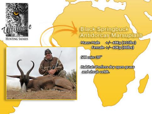 Black Springbuck.jpg