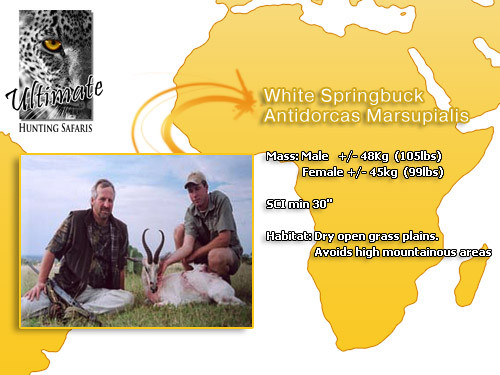 White-Springbok.jpg