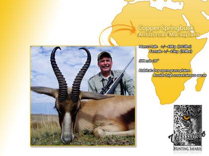 Copper-Springbok.jpg