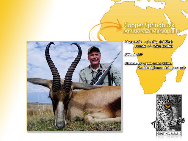 Copper-Springbok.jpg