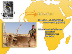 Fallow-Deer.jpg