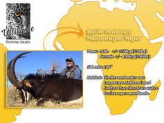 Sable-Antelope.jpg