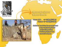 Mountain Zebra.jpg