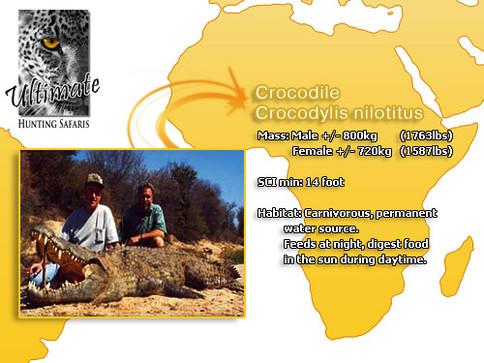 Nile Crocodile.jpg